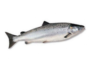 Рыба Сайда с головой замороженная 1кг